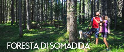 Foresta di Somadida - consorzio turistico tre cime dolomiti auronzomisurina