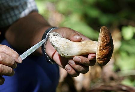 raccolta-funghi-450